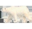 Immagine Orso bianco